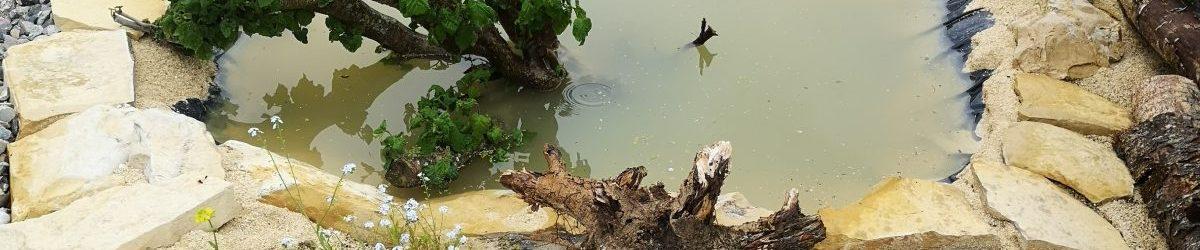 11. Juni 2019 – Nach dem Regen ist das Sumpfbeet gut gefüllt