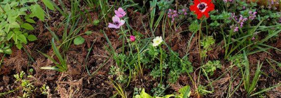 16. Mai 2020 – Impressionen des Waldbeetes